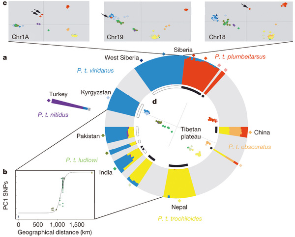 Genomic divergence in a ring species complex cees centre for genomic divergence in a ring species complex ccuart Images