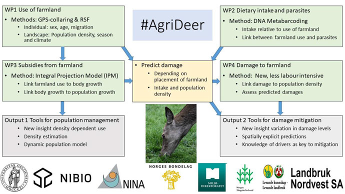An overview of #AgriDeer work packages, their connections, output and institutions involved.