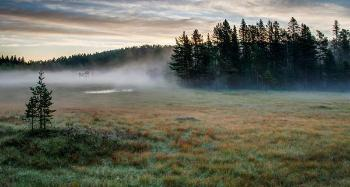 Morning fog formed in a shallow stable boundary layer on a boreal forest site in Telemark, Norway