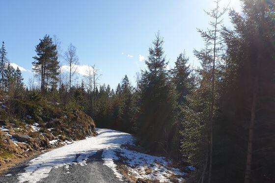 Skogplanting har mange effekter på omgivelsene. Foto: NVE/Irene Brox Nilsen