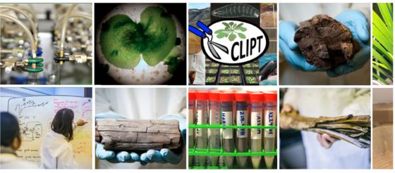 Foto: CLIPT-lab:Noen glimt fra arbeidet i laboratoriet og prøvene som analyseres. Foto/collage: CLIPT/ GKT