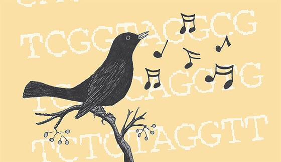 Fugl og noter, illustrasjon