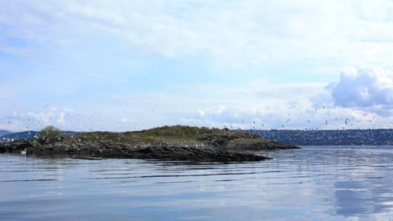 Øy i havet, måker og fugler som flyr