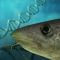 Evolutionary biology and genomics